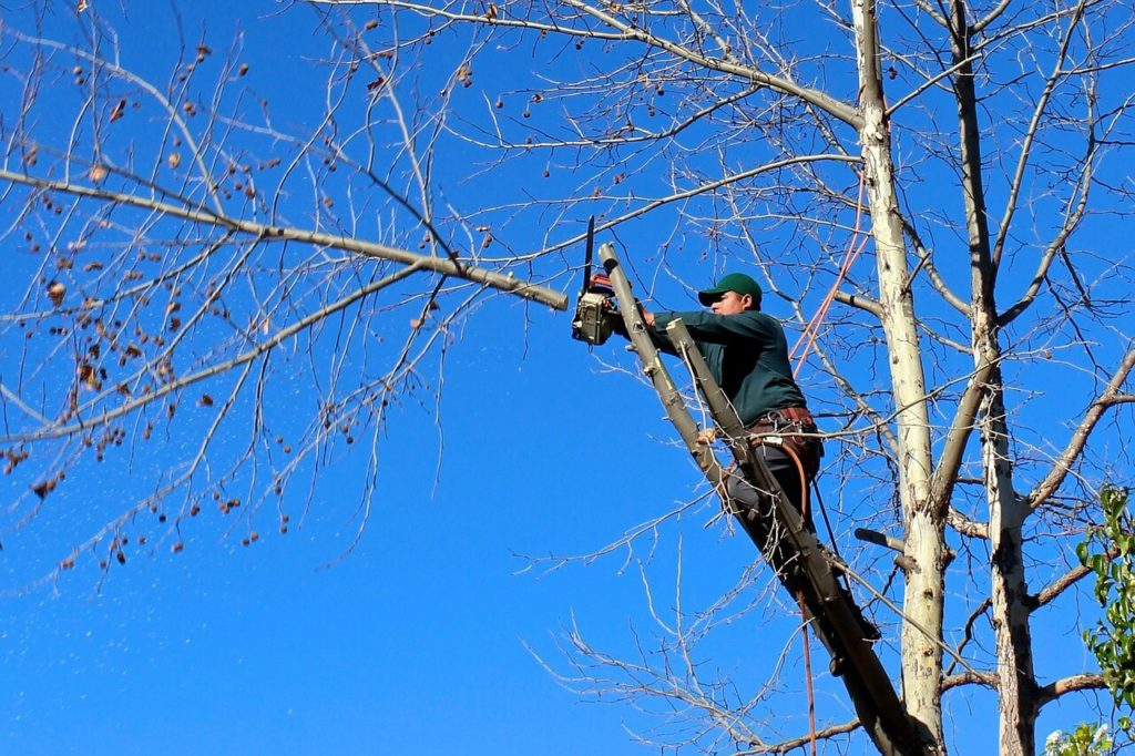 Contact Us-West Miami FL Tree Trimming and Stump Grinding Services-We Offer Tree Trimming Services, Tree Removal, Tree Pruning, Tree Cutting, Residential and Commercial Tree Trimming Services, Storm Damage, Emergency Tree Removal, Land Clearing, Tree Companies, Tree Care Service, Stump Grinding, and we're the Best Tree Trimming Company Near You Guaranteed!