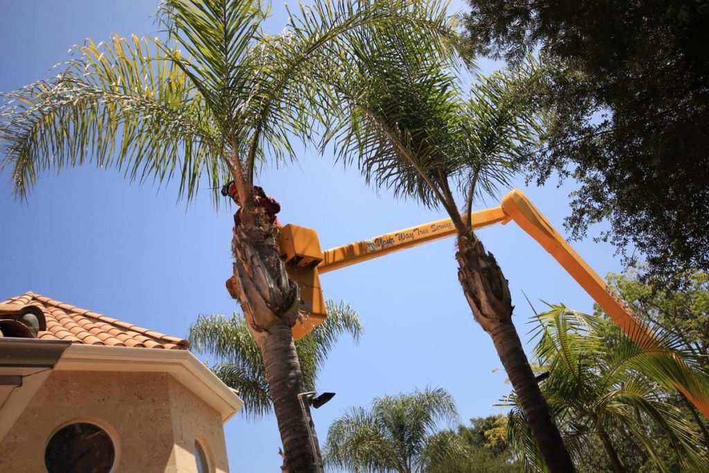 Palm Tree Trimming-West Miami FL Tree Trimming and Stump Grinding Services-We Offer Tree Trimming Services, Tree Removal, Tree Pruning, Tree Cutting, Residential and Commercial Tree Trimming Services, Storm Damage, Emergency Tree Removal, Land Clearing, Tree Companies, Tree Care Service, Stump Grinding, and we're the Best Tree Trimming Company Near You Guaranteed!