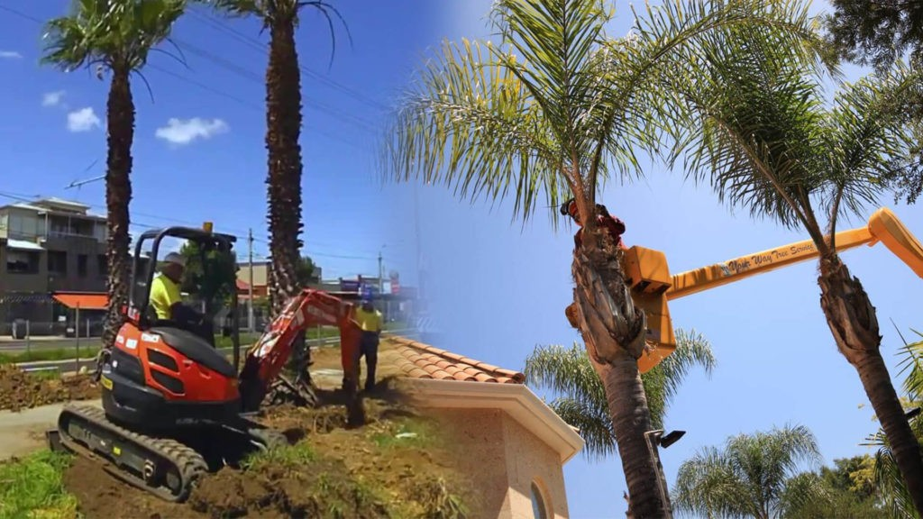 Palm tree trimming & palm tree removal-West Miami FL Tree Trimming and Stump Grinding Services-We Offer Tree Trimming Services, Tree Removal, Tree Pruning, Tree Cutting, Residential and Commercial Tree Trimming Services, Storm Damage, Emergency Tree Removal, Land Clearing, Tree Companies, Tree Care Service, Stump Grinding, and we're the Best Tree Trimming Company Near You Guaranteed!