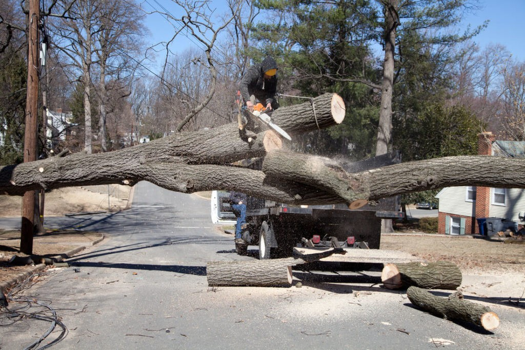 Residential Tree Services-West Miami FL Tree Trimming and Stump Grinding Services-We Offer Tree Trimming Services, Tree Removal, Tree Pruning, Tree Cutting, Residential and Commercial Tree Trimming Services, Storm Damage, Emergency Tree Removal, Land Clearing, Tree Companies, Tree Care Service, Stump Grinding, and we're the Best Tree Trimming Company Near You Guaranteed!