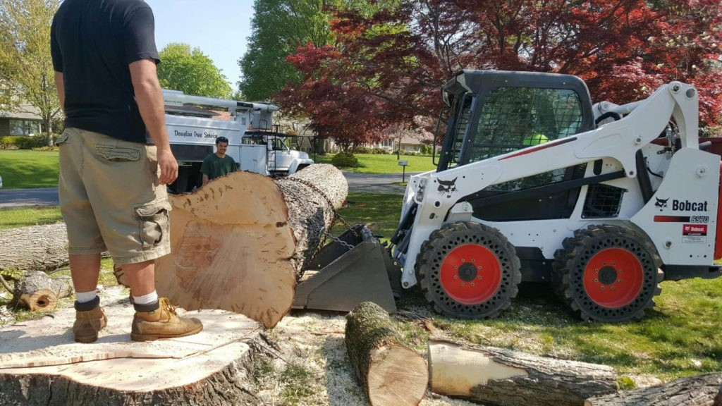 Services-West Miami FL Tree Trimming and Stump Grinding Services-We Offer Tree Trimming Services, Tree Removal, Tree Pruning, Tree Cutting, Residential and Commercial Tree Trimming Services, Storm Damage, Emergency Tree Removal, Land Clearing, Tree Companies, Tree Care Service, Stump Grinding, and we're the Best Tree Trimming Company Near You Guaranteed!