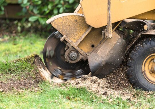 Stump Grinding-West Miami FL Tree Trimming and Stump Grinding Services-We Offer Tree Trimming Services, Tree Removal, Tree Pruning, Tree Cutting, Residential and Commercial Tree Trimming Services, Storm Damage, Emergency Tree Removal, Land Clearing, Tree Companies, Tree Care Service, Stump Grinding, and we're the Best Tree Trimming Company Near You Guaranteed!