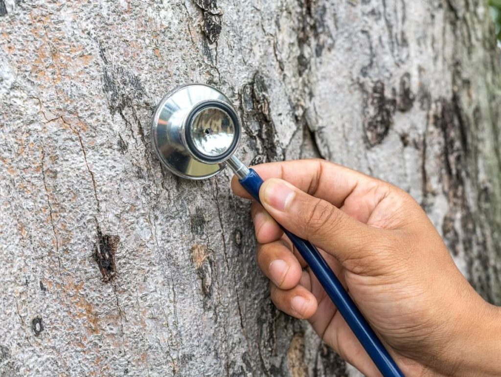 Tree Assessments-West Miami FL Tree Trimming and Stump Grinding Services-We Offer Tree Trimming Services, Tree Removal, Tree Pruning, Tree Cutting, Residential and Commercial Tree Trimming Services, Storm Damage, Emergency Tree Removal, Land Clearing, Tree Companies, Tree Care Service, Stump Grinding, and we're the Best Tree Trimming Company Near You Guaranteed!