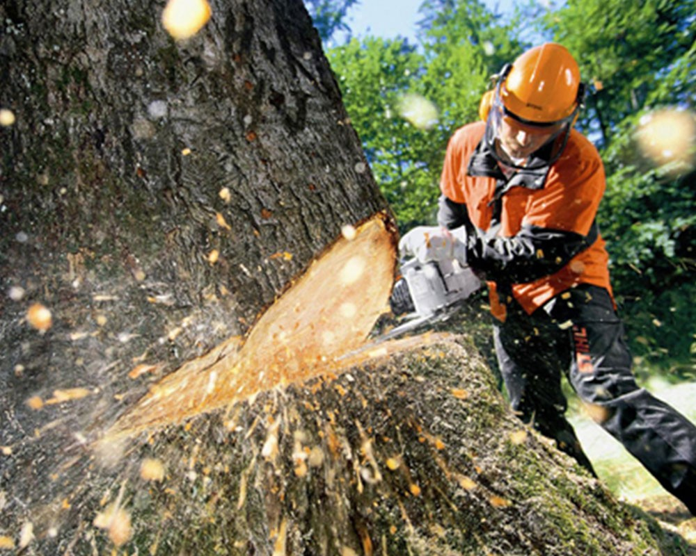 Tree Cutting-West Miami FL Tree Trimming and Stump Grinding Services-We Offer Tree Trimming Services, Tree Removal, Tree Pruning, Tree Cutting, Residential and Commercial Tree Trimming Services, Storm Damage, Emergency Tree Removal, Land Clearing, Tree Companies, Tree Care Service, Stump Grinding, and we're the Best Tree Trimming Company Near You Guaranteed!