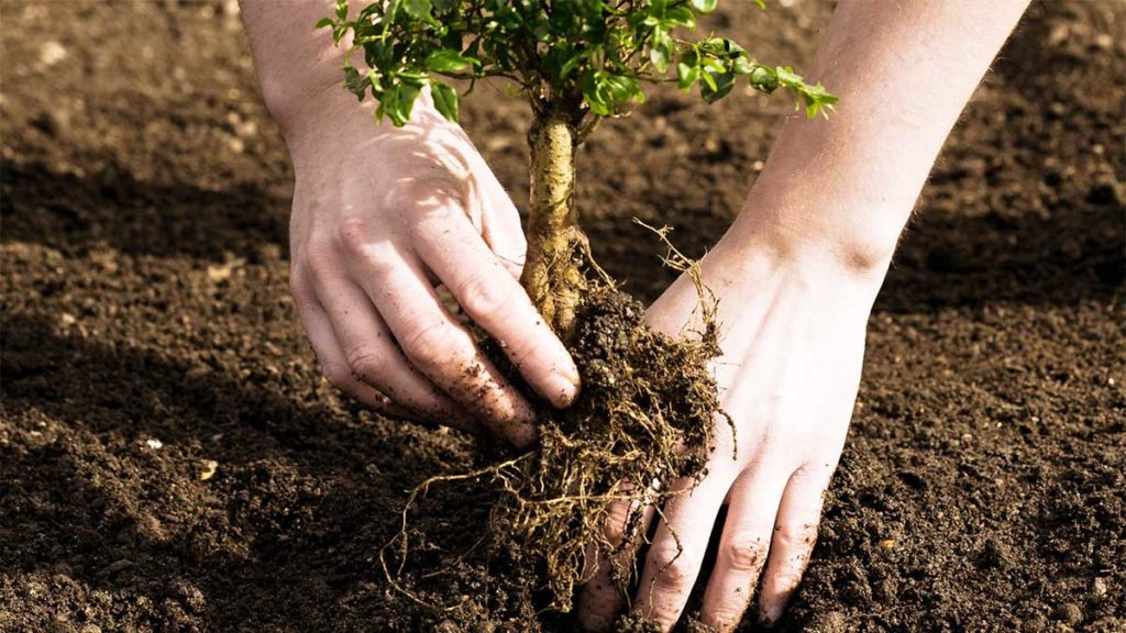 Tree Planting-West Miami FL Tree Trimming and Stump Grinding Services-We Offer Tree Trimming Services, Tree Removal, Tree Pruning, Tree Cutting, Residential and Commercial Tree Trimming Services, Storm Damage, Emergency Tree Removal, Land Clearing, Tree Companies, Tree Care Service, Stump Grinding, and we're the Best Tree Trimming Company Near You Guaranteed!