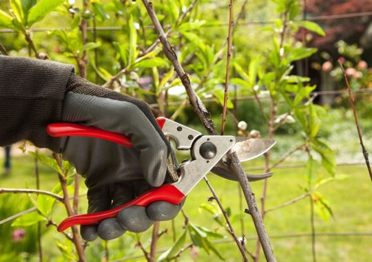 Tree Pruning-West Miami FL Tree Trimming and Stump Grinding Services-We Offer Tree Trimming Services, Tree Removal, Tree Pruning, Tree Cutting, Residential and Commercial Tree Trimming Services, Storm Damage, Emergency Tree Removal, Land Clearing, Tree Companies, Tree Care Service, Stump Grinding, and we're the Best Tree Trimming Company Near You Guaranteed!