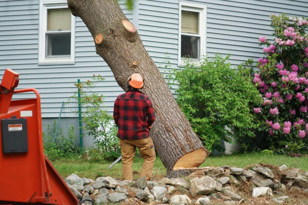 Tree Removal-West Miami FL Tree Trimming and Stump Grinding Services-We Offer Tree Trimming Services, Tree Removal, Tree Pruning, Tree Cutting, Residential and Commercial Tree Trimming Services, Storm Damage, Emergency Tree Removal, Land Clearing, Tree Companies, Tree Care Service, Stump Grinding, and we're the Best Tree Trimming Company Near You Guaranteed!