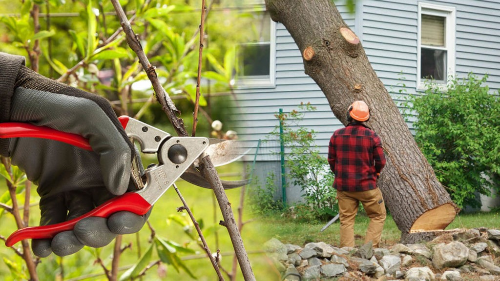 Tree pruning & tree removal-West Miami FL Tree Trimming and Stump Grinding Services-We Offer Tree Trimming Services, Tree Removal, Tree Pruning, Tree Cutting, Residential and Commercial Tree Trimming Services, Storm Damage, Emergency Tree Removal, Land Clearing, Tree Companies, Tree Care Service, Stump Grinding, and we're the Best Tree Trimming Company Near You Guaranteed!